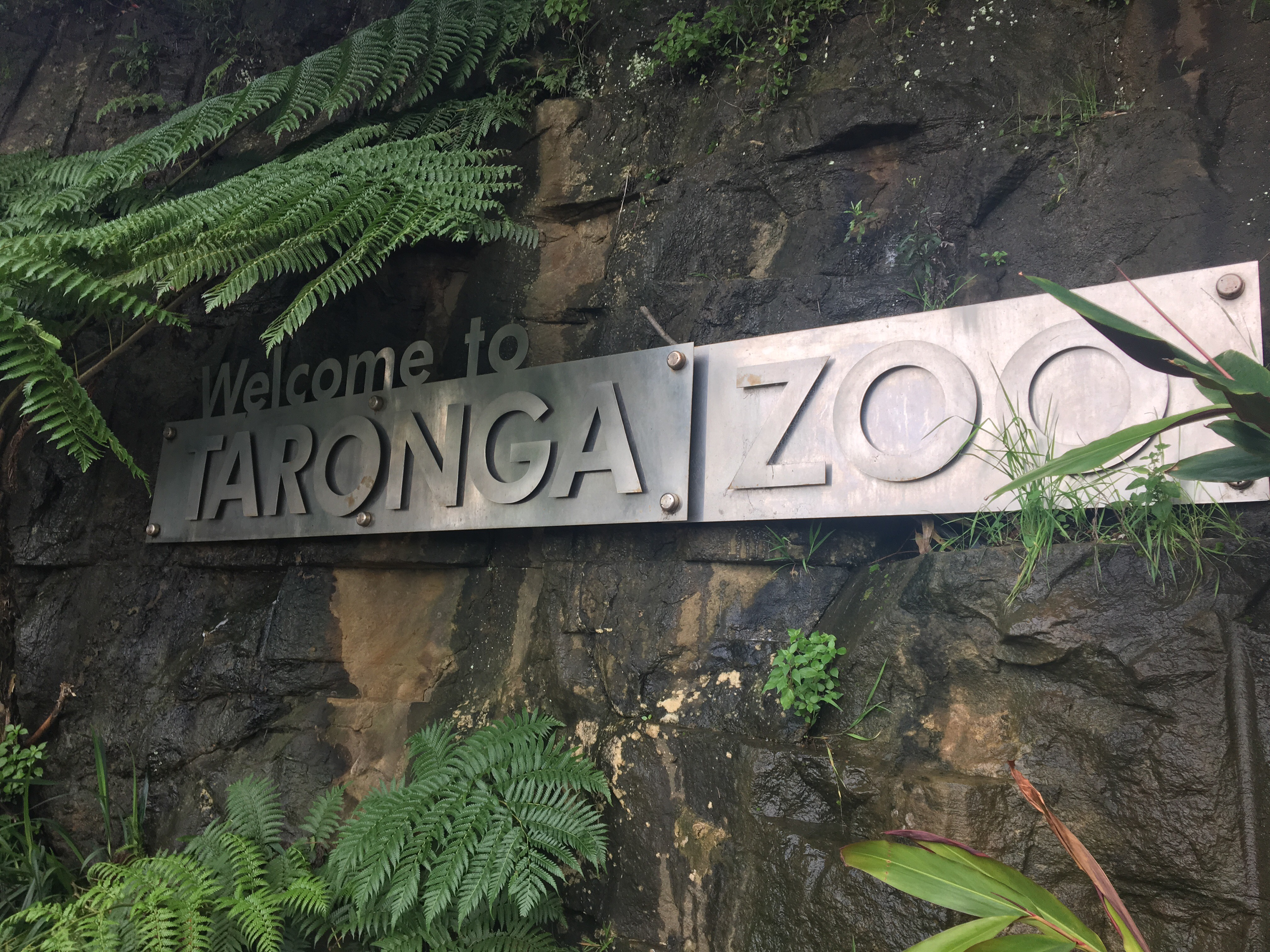 APAStudyAbroad_Sydney_Summer2017_From Skylee Lawton Zoo 11.jpeg
