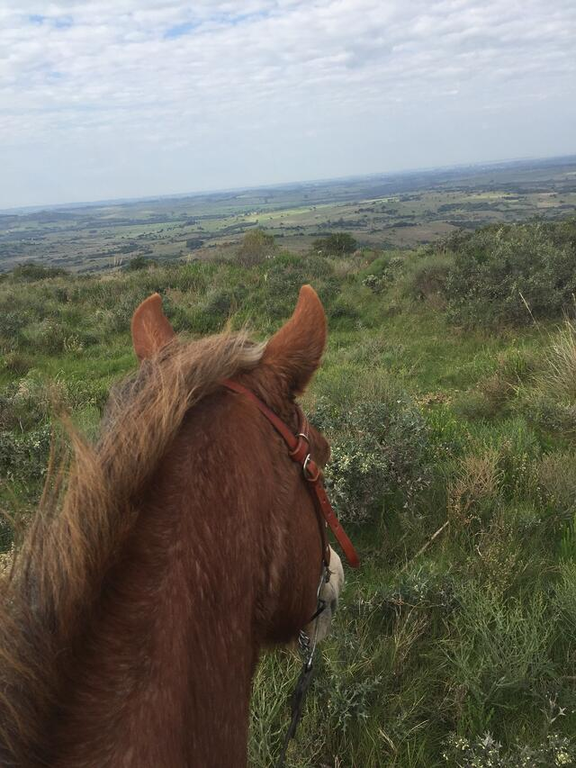 CAPAStudyAbroad_Buenos Aires_Spring2018_From Claire Shrader - Horseback Riding at Caballos de Luz in Uruguay_1