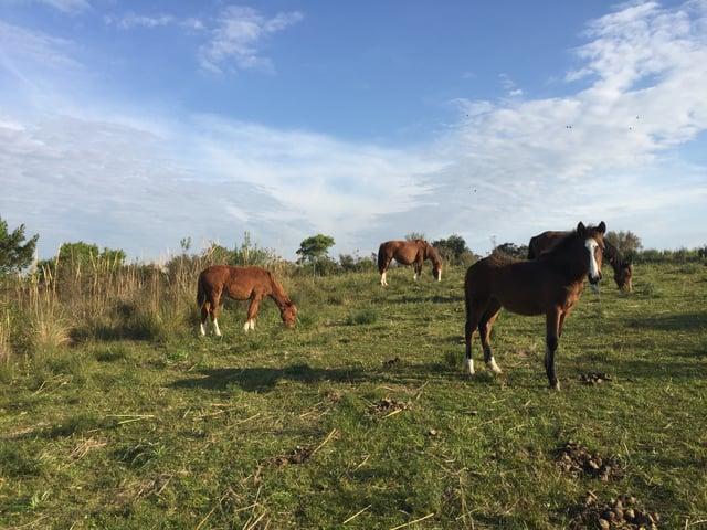 CAPAStudyAbroad_Buenos Aires_Spring2018_From Claire Shrader - Horseback Riding at Caballos de Luz in Uruguay_3