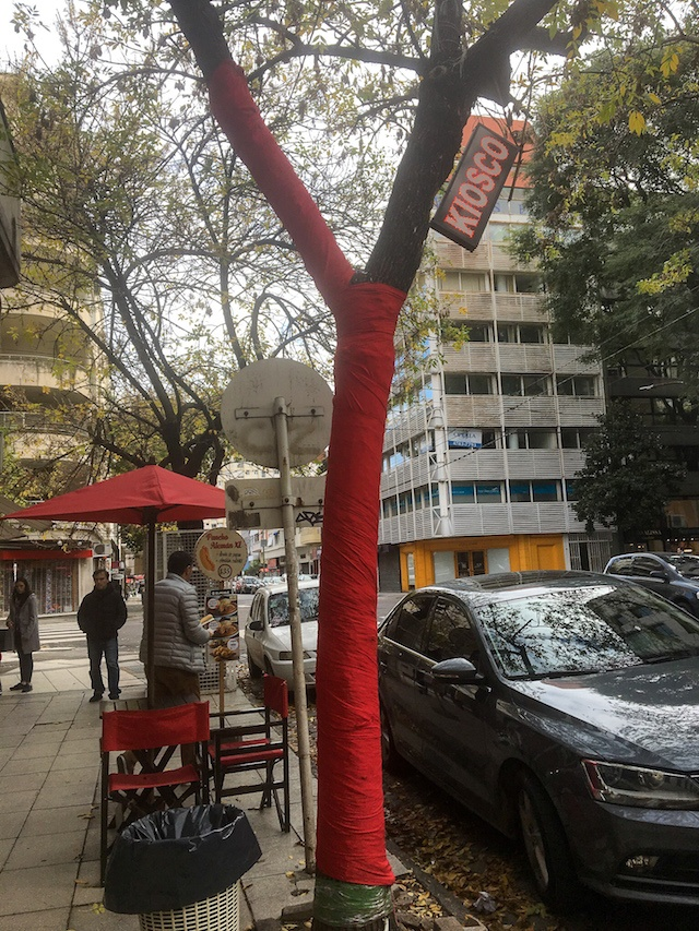 CAPAStudyAbroad_Buenos Aires_Summer2018_From Nora Callahan - Yarn Bombing on Trees