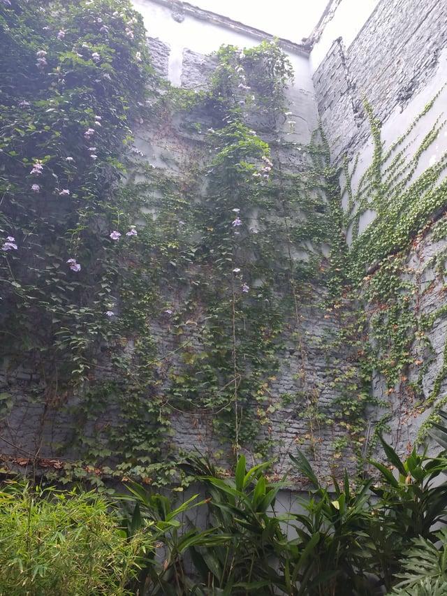 Aesthetically-pleasing plant walls