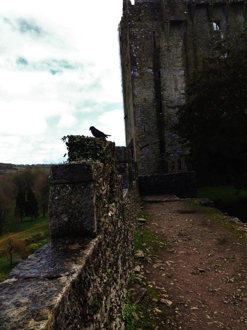 CAPAStudyAbroad_Dublin_Spring2017_From Nathan Overlock - Ireland - Blarney Castle.jpg
