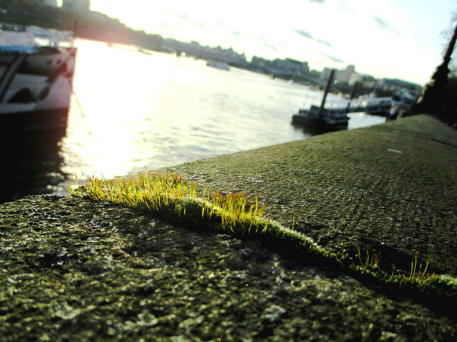 CAPAStudyAbroad_London_Spring2016_From_Rikki_Li_-_Last_Post_-_JPEG_8.jpg