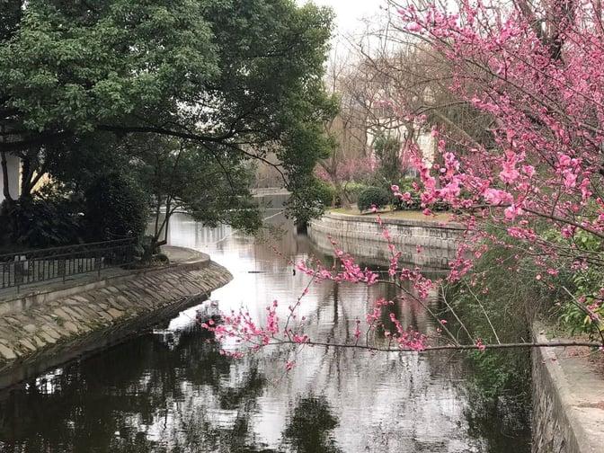 CAPAStudyAbroad_Shanghai_Spring2017_From Danielle Thai - The River Running Through Campus.jpg
