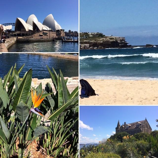 CAPAStudyAbroad_Sydney_Fall2016_From_Sara_Martin.jpg