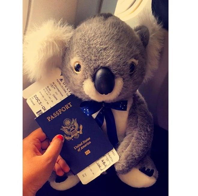 CAPAStudyAbroad_Sydney_Spring2016_From_Kisha_Patel_-_last_post_-_1_koala.jpeg
