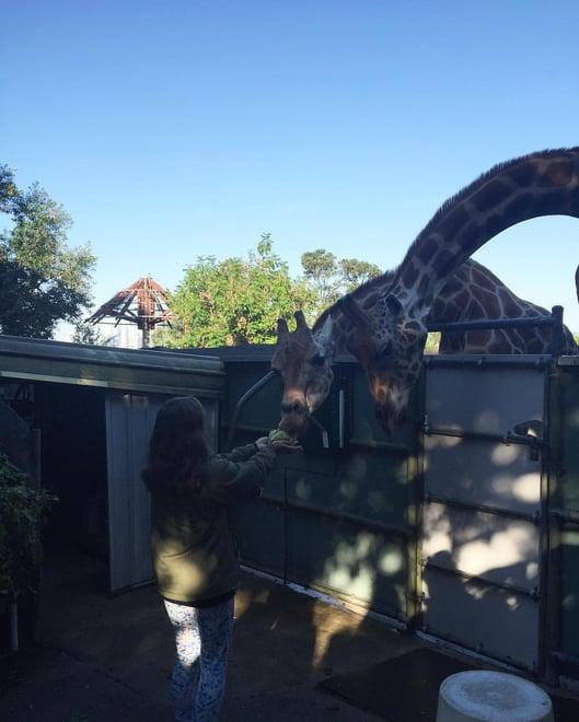 CAPAStudyAbroad_Sydney_Spring2016_Rachael Bouley 6.jpg