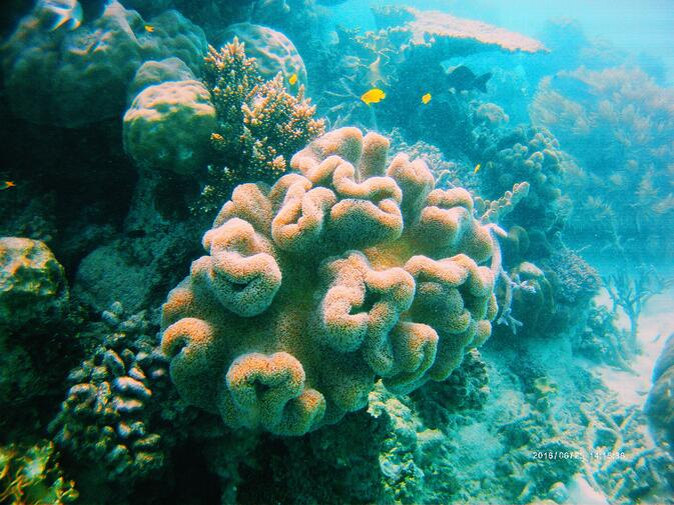 CAPAStudyAbroad_Sydney_Summer2016_From_Ashley_Whittington_-_Snorkeling_the_Great_Barrier_Reef.jpg