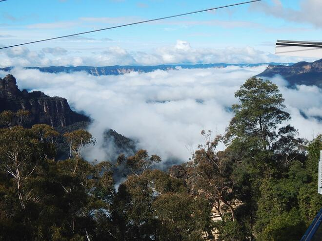 CAPAStudyAbroad_Sydney_Summer2016_From_Catherine_Crevecoeur_-_Blue_Mountains_and_Featherdale_Post5.jpg