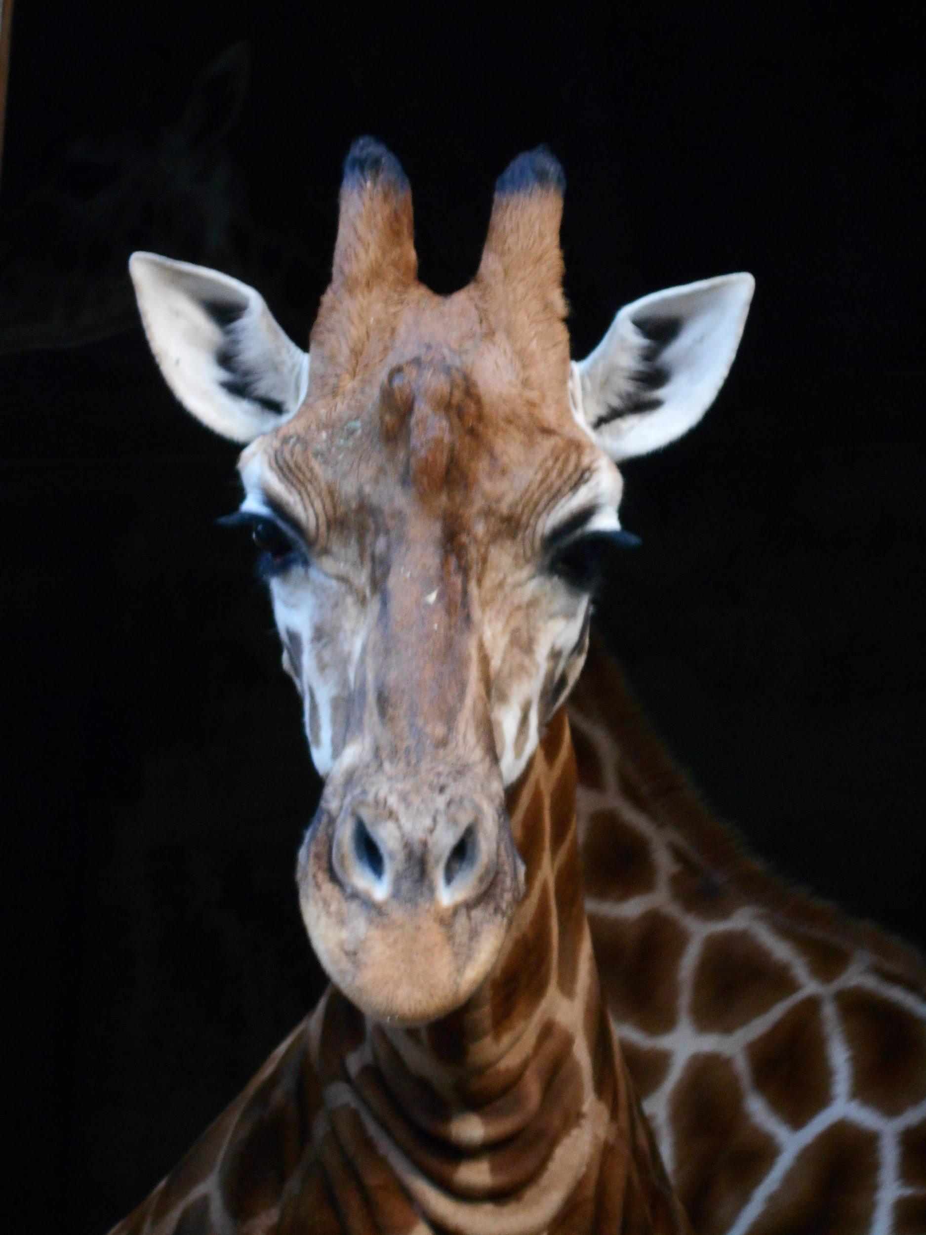 CAPAStudyAbroad_Sydney_Summer2017_From Shayanna Roman Zoo 1.jpg