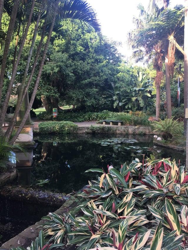 CAPAStudyAbroad_Sydney_Summer2017_From Skylee Lawton Royal Botanical Garden.jpg