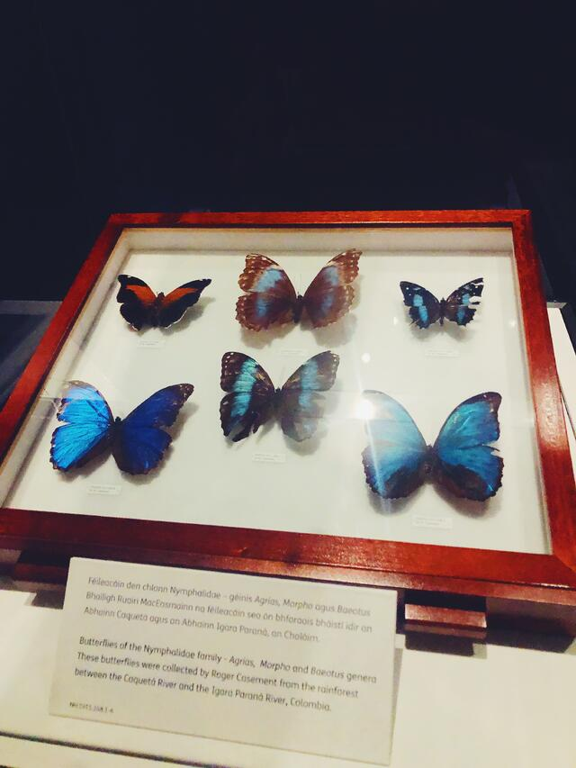 CAPAStudyAbroad_Fall 2019_Dublin_Ellie LaFountain_ButterfliesatNationalMuseum