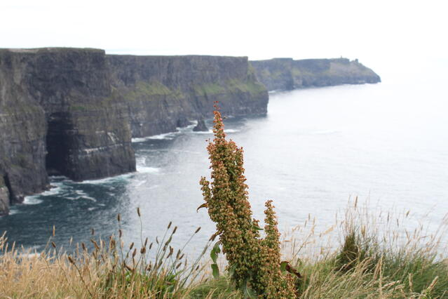 Moher Perspective
