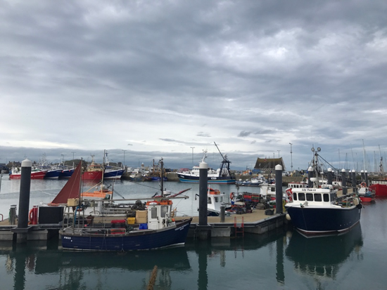 CAPAStudyAbroad_Fall2017_Dublin_From Elizabeth Leahy - Boats in the Harbor of Howth.png