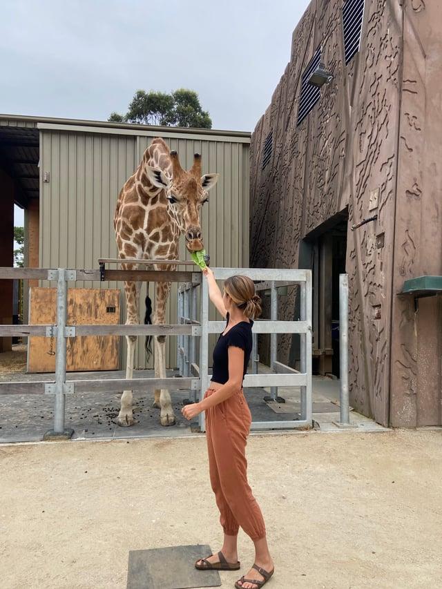 CAPAStudyAbroad_Sydney_Spring 2020_Emma Estabrook_Giraffe