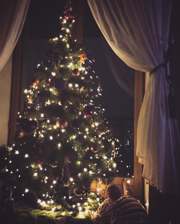 CAPAStudyAbroad_Sydney_Fall2017_From Hanna Okhrimchuk - Christmas at Home.jpg