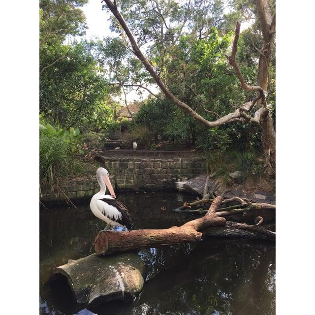 CAPAStudyAbroad_Sydney_Fall2017_From Hanna Okhrimchuk - Roar & Snore at Taronga Zoo_2.jpg