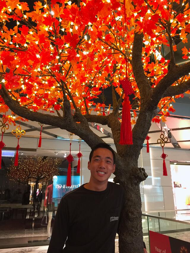 CAPAStudyAbroad_Sydney_Spring 2019_Jeff Chan_Westfield Tree
