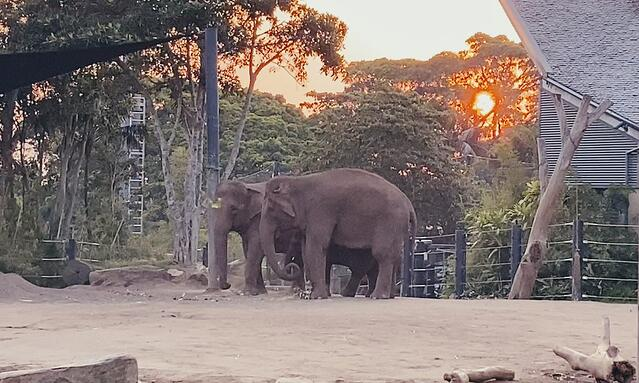 CAPAStudyAbroad_Fall 2019_Sydney_Minh Ta_A Family of Elephants in the Sun