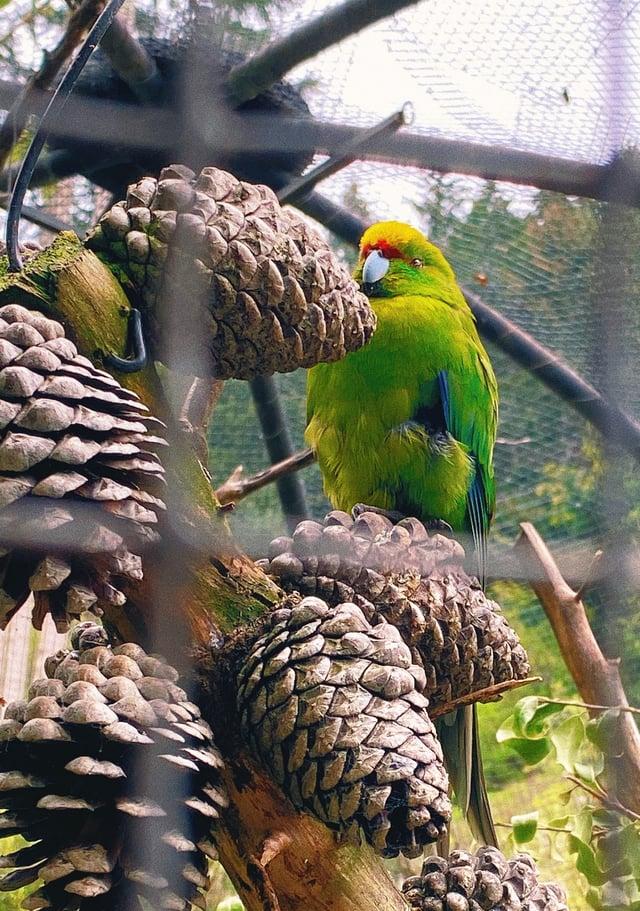 CAPAStudyAbroad_Fall 2019_Sydney_Minh Ta_Kiwi Birdlife Park - Copy