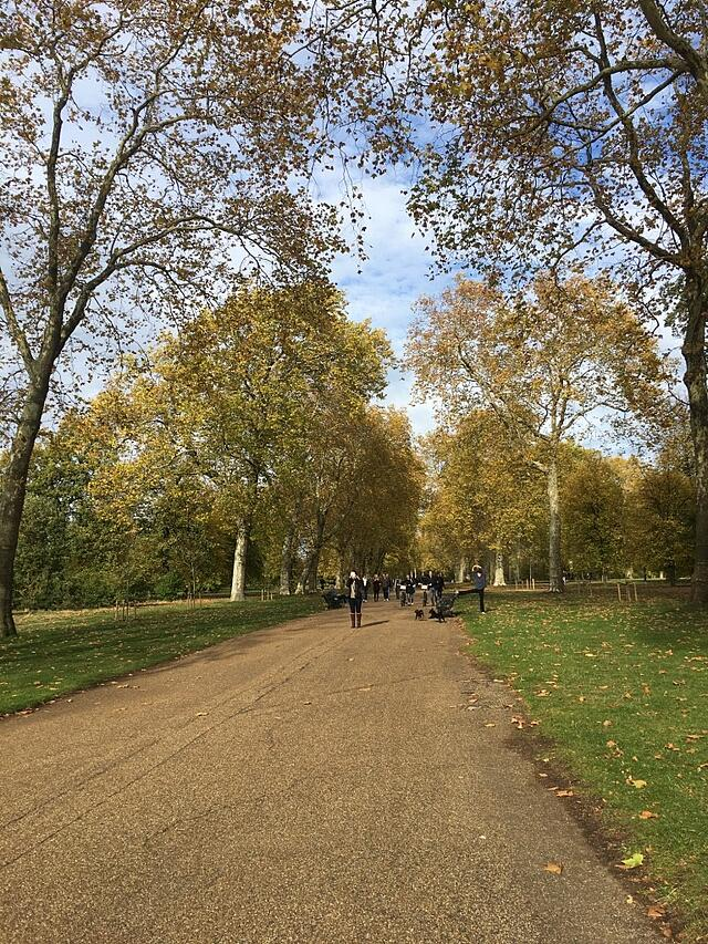 Hyde Park dressed in Fall foliage and a surprisingly blue sky