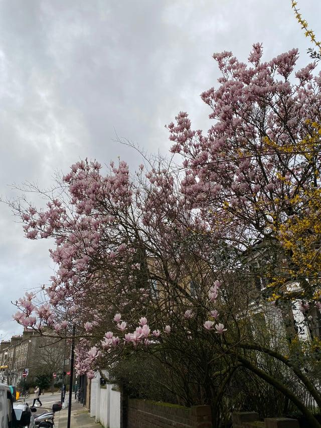 CAPAStudyAbroad_Spring2020_London_JamesNightengale_Flowers