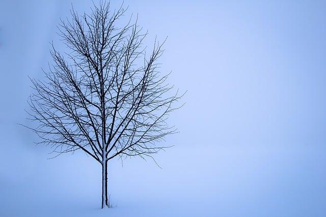 tree-1056598_640.jpg